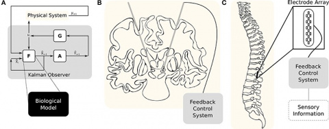 Как улучшить мозг. Выпуск 30: где применять нейроморфные процессоры?