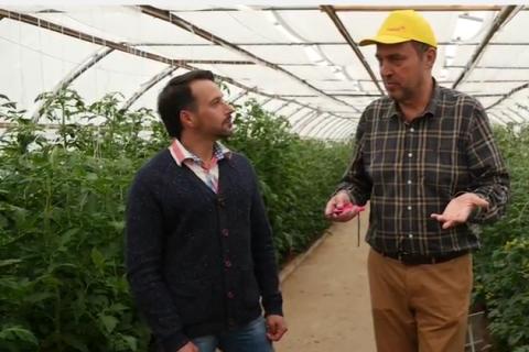 5 ошибок при выращивании томата