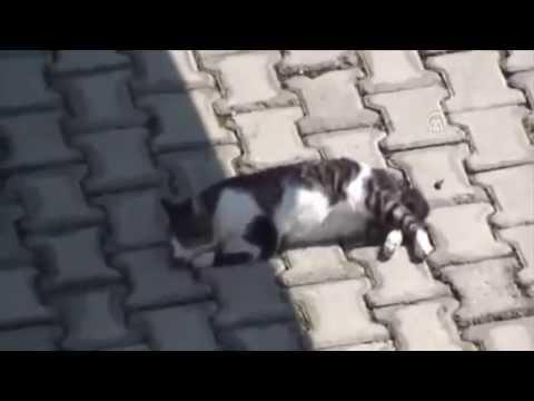 Питбуль, увидев раненного кота, тут же бросился к нему и начал лаять, призывая людей помочь