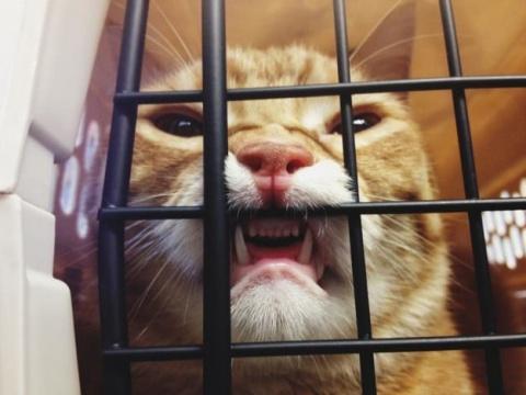 Коты - звери с причудами