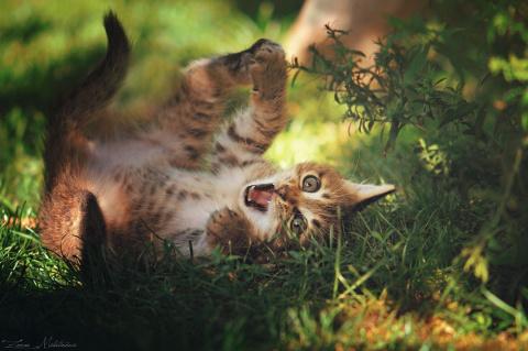 Котики от сербского фотографа Zoran Milutinovic