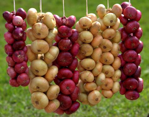 5 важных правил хранения лука