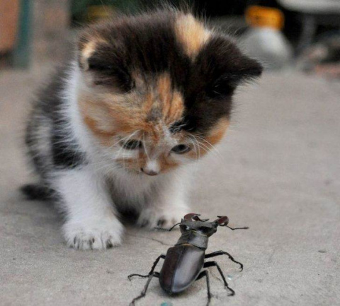 Маленький котенок спасал зас…