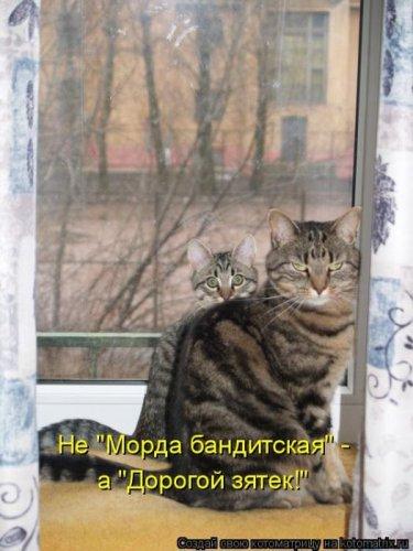 Кошки и другие...