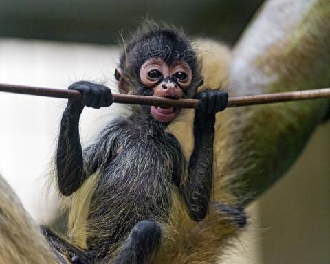 Детеныши животных. Милые и пушистые