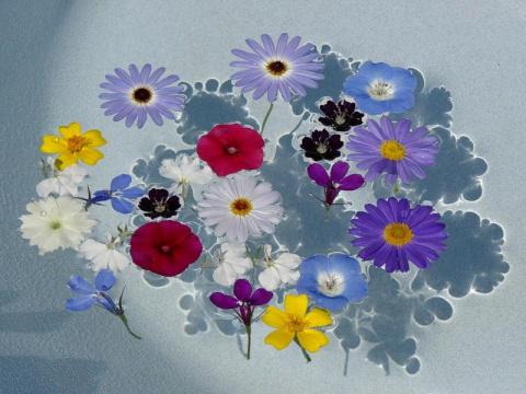 Цветочные композиции на воде..