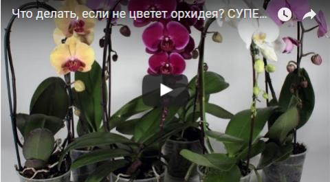 Что делать, если не цветет орхидея? СУПЕР-ПРОСТОЙ СПОСОБ