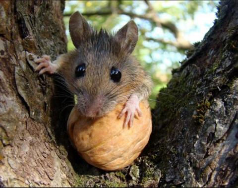«Прожорливые» Украинские мыши