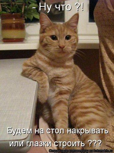 Пятничные потешки: котоматрица
