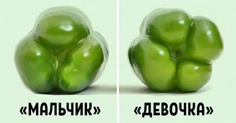 Покупай болгарский перец по этому признаку — и не прогадаешь!