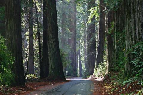 Национальный парк Редвуд - место обитания зеленых великанов