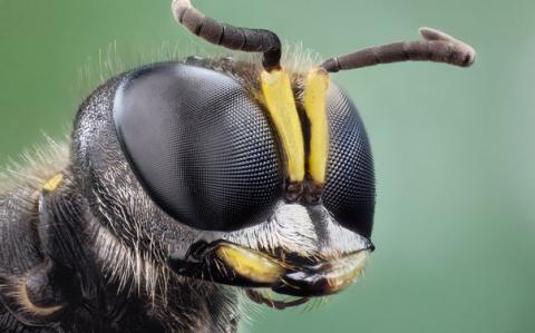 Яд бразильской осы убивает р…