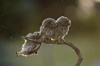 10 смешных фото дикой природ…