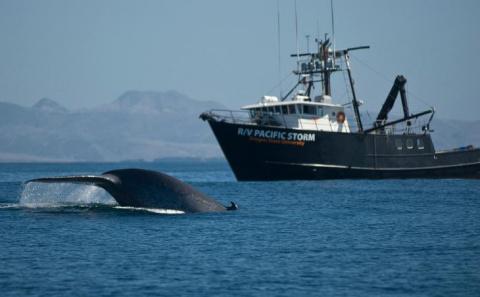 Синий кит – животное или рыба?