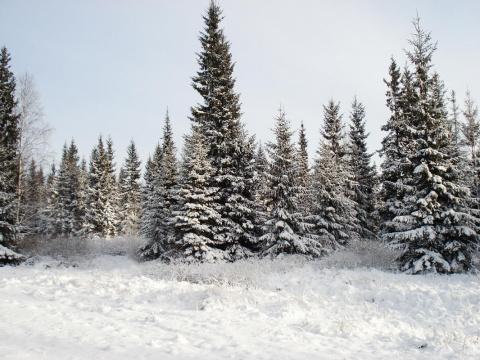 Кизеловский лес