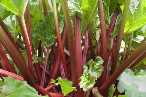 Позаботьтесь о многолетних овощах