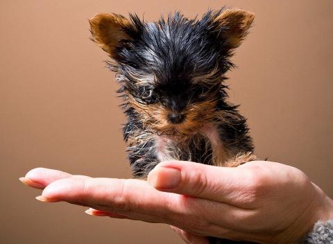 Самые маленькие собачки