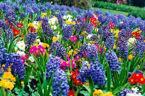 Какие цветы можно высаживать…