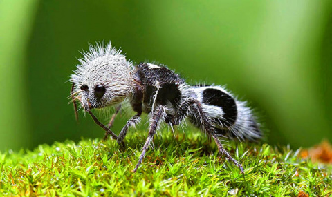 Интересные факты о муравьях + Видео