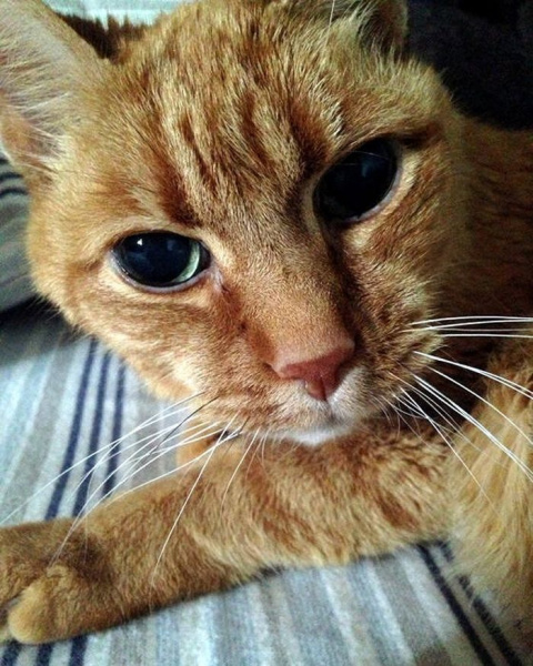 22-летний кот сопровождает хозяина с момента его рождения