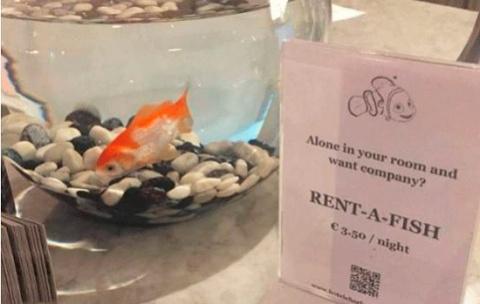 Бельгийский отель предлагает…