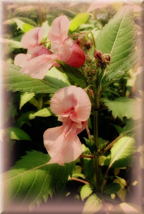 В розовом облаке