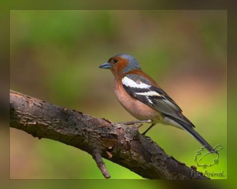 А птицы говорят