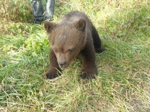 История медвежонка Сени