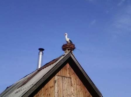 Аист на крышу
