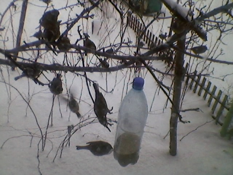 Кормушка для птиц из пласстмасовой бутылки.
