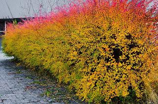 Что стоит посадить на даче осенью?