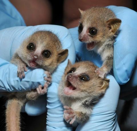 Странные животные с удивительно милыми детёнышами