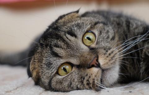 """""""Ваш котик лишний"""". В Госдуме хотят ограничить количество животных в квартире"""