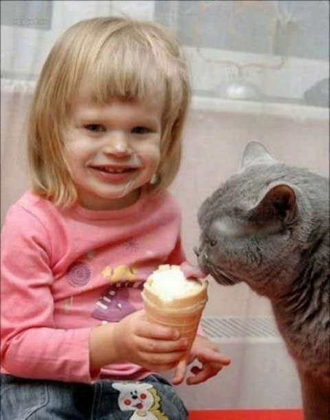 Почему дети любят котов