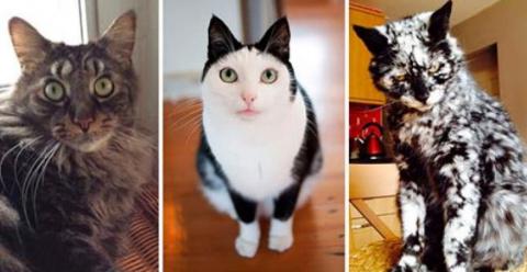 Кошки с необычным окрасом, к…