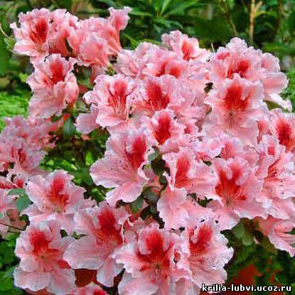 Значение цветов. Какие цветы…