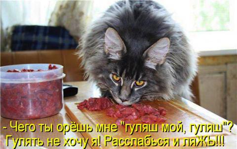 Котоматрицы с кулинарным уклоном 6