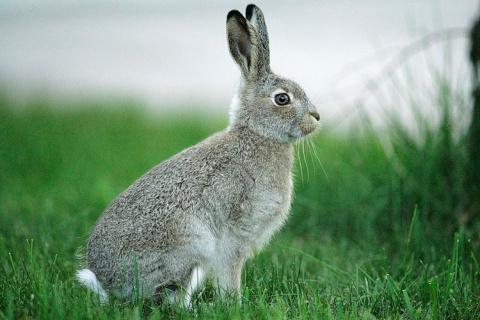 ТЕРЕМОК. Начинающему кролиководу