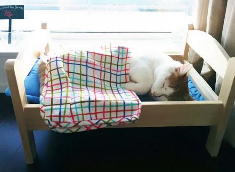IKEA подарила приюту для жив…
