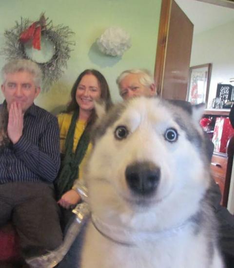 Эти собаки просто очень любят фотографироваться