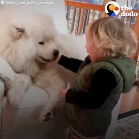 Этот пес — верный партнер ма…
