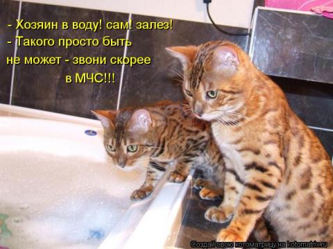 Коты в ванной 3