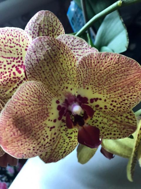 Oрхидeи для начинающих: 8 пр…
