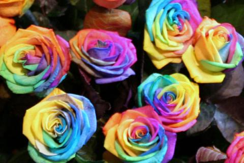 Цвет розы