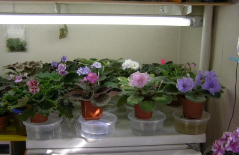 МИР РАСТЕНИЙ.Закон выращивания комнатных растений (5)
