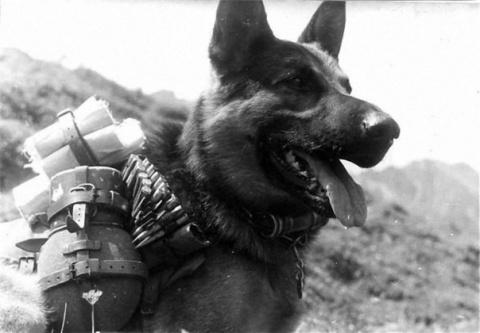 Собаки майора Лопатина. Руко…