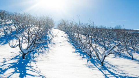Надо ли утаптывать снег вокр…