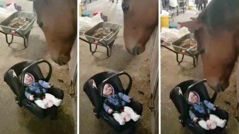 Эта лошадь знает, как успоко…