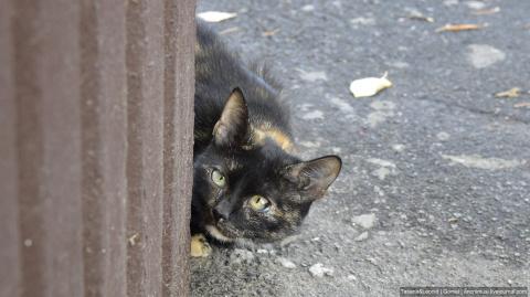 Кошка Сима.