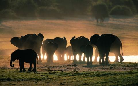 ТЕРЕМОК. Интересные факты о слонах